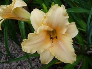 Claudia's garden